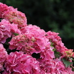 Nicolai Bergmann NOMU - 外にも花や緑がいっぱい!