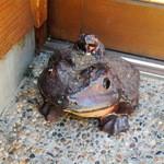 石臼挽き手打蕎楽亭 - 蛙の置物