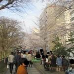 27523324 - 外堀公園の桜並木