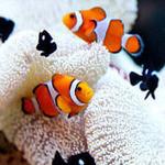 アクアリウムイタリアン心斎橋ライム - 一万匹の熱帯魚がお出迎え♪