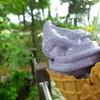 ハーブ庭園 旅日記 ソフトクリーム売店 - 料理写真:ラベンダーソフトクリーム