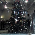 ぞうさん食堂 - 巨大クリスマスツリー!!外から・・・