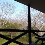 磯乃屋 -  2F、旅館の裏はすぐ森です・・♪ 朝は小鳥のさえずりが☆