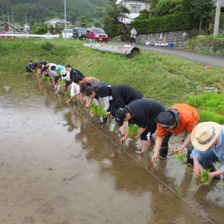 ヒカリヤヒガシのお米は私たちが作った無農薬「合鴨米」