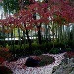 嵯峨野 - お店の庭