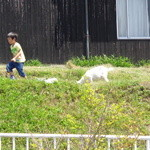そばカフェ生田村 - ヤギの赤ちゃん