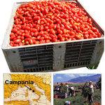 ピザレボ - トマト