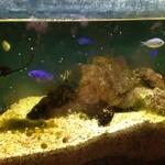 ペリカンレスト - その他写真:熱帯魚