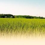 博多あごだしもつ鍋 土の上の花 - 名物 自社商品 平打博多和パスタ ~秋月本葛&福岡県産小麦特製和パスタ 柔らかな優しい食感が特徴でございます。~