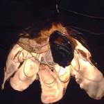 仕立屋 - 牡蠣の貝殻で作った照明☆