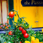 Osteria Bar the passion -