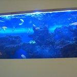 SHUTTERS - 壁に埋め込まれた水槽の熱帯魚観察!