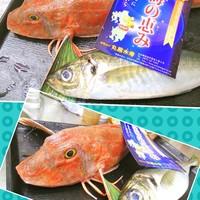 元気屋 - 朝は水産仲卸に勤める店主だから鮮度バツグンの御刺身も楽しめます!