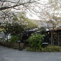 甘味茶屋 - 春になると満開の桜