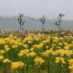 大阪舞洲ゆり園 - 満開の百合と港の景色が素晴らしい☆♪