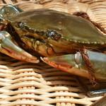 日本料理 日の出 - 浜名湖産どうまん蟹