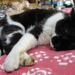 乃木そば神谷 - 店内でうたた寝している地域猫ちゃん♪