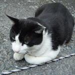 乃木そば神谷 - こちらも住みついている地域猫くん♪