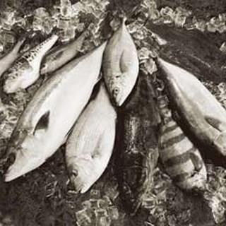 近大卒の魚学園を卒業した魚たち!