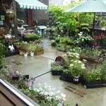28507914 - 店内窓から見える景色(お花やハーブ等販売されてます)