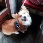 28562803 - 我が家の愛犬^ ^ テラス席です^ ^                       2014.6訪問^ ^