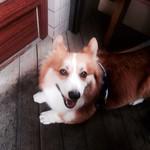 28562805 - 我が家の愛犬^ ^ テラス席です^ ^                         2014.6訪問^ ^