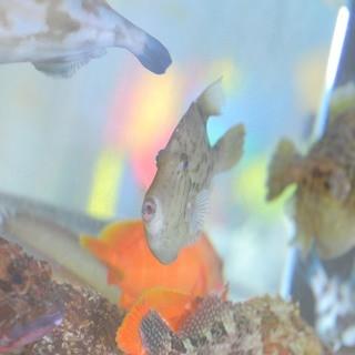 旬の魚を店内の水槽で泳がせているので、鮮度抜群!