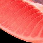 さしみ~や - 料理写真:生本マグロ