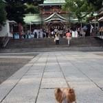 28645294 - 近くの富岡八幡宮・茅の輪くぐりの様子です。