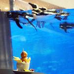ペンギンカフェ - ペンギンプリンとペンギンのコラボ。(笑)