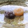 Housendou - 料理写真:かしわべ