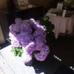 菓子舗 日影茶屋 - 店先の紫陽花が一番キレイな時でしょう
