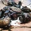 炭鶏家みどり - 料理写真:もも肉岩塩炙り焼き♪