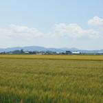 28763430 - 周囲は麦畑