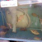 平野鮮魚 - 水槽②ハゲもおいしそう・・・