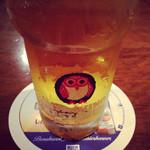 インゴ ビンゴ - 常陸ネストビール ドラフト