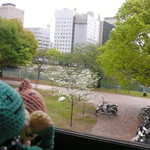 28831727 - 2階から眺める川面。ありゃ、ハナミズキじゃろ。