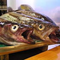 鰍 - 助宗鱈です。目が生き生きしているでしょう。湯煮になります。