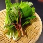 SaLa2 - これはLED野菜のお勧めのもの