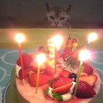 2902800 - クリスマスケーキ