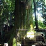 香住 - 蛸杉