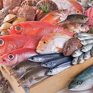 壱岐、高知から毎日直送の鮮魚