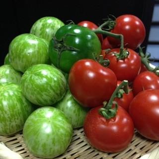 市場で直接買い付ける新鮮野菜