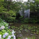 アサヒビール 大山崎山荘 - 大山崎山荘美術館 庭園 7月ですが紫陽花が咲いていました