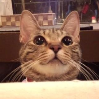看板猫のチャーリーがお出迎え
