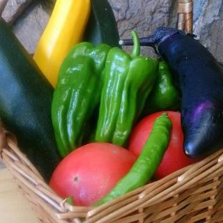 契約農家直送の新鮮道産野菜