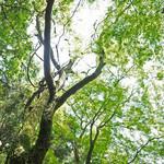 だんごあん - 床の上を見ると森林