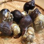 竹はる - つぶ貝