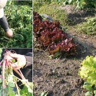 毎日届く、契約農家からのフレッシュなお野菜たち・・・。