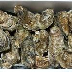 カンティネッタ バルベーラ - お勧めな食材が入ってます!! ★仙鳳趾(せんぽうし)牡蠣は釧路町の東側で厚岸湾 の端に位置する身の締まった プリプリ牡蠣です。 ★アルベンシス茸!!白色のきのこで、シャキシャキした歯ごたえが特徴です!! その他モンサンミッシェルのムール貝や大阪・阪南市のなにわ黒牛などなど盛りだくさんです。  暑い時こそ食欲増さないといけません!!
